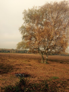 This picture of a tree has nothing to do with my hiatus. I took it a couple of weeks ago and really like it.